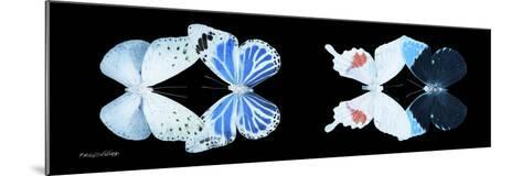 Miss Butterfly X-Ray Duo Black Pano V-Philippe Hugonnard-Mounted Photographic Print