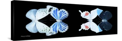 Miss Butterfly X-Ray Duo Black Pano V-Philippe Hugonnard-Stretched Canvas Print