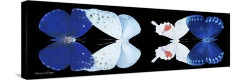 Miss Butterfly X-Ray Duo Black Pano VII-Philippe Hugonnard-Stretched Canvas Print