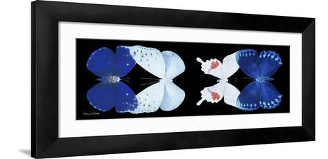 Miss Butterfly X-Ray Duo Black Pano XII-Philippe Hugonnard-Framed Art Print
