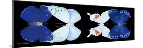 Miss Butterfly X-Ray Duo Black Pano XII-Philippe Hugonnard-Mounted Photographic Print