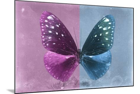 Miss Butterfly Euploea - Hot Pink & Blue-Philippe Hugonnard-Mounted Photographic Print