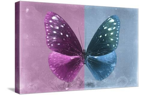 Miss Butterfly Euploea - Hot Pink & Blue-Philippe Hugonnard-Stretched Canvas Print