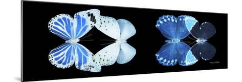 Miss Butterfly X-Ray Duo Black Pano X-Philippe Hugonnard-Mounted Photographic Print