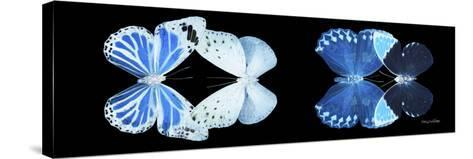 Miss Butterfly X-Ray Duo Black Pano X-Philippe Hugonnard-Stretched Canvas Print