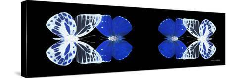 Miss Butterfly Duo Priopomia Pan - X-Ray Black Edition II-Philippe Hugonnard-Stretched Canvas Print