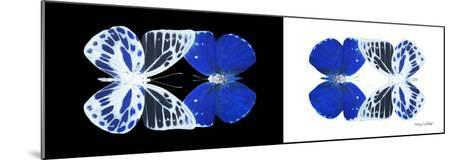 Miss Butterfly Duo Priopomia Pan - X-Ray B&W Edition-Philippe Hugonnard-Mounted Photographic Print