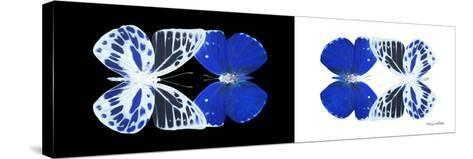 Miss Butterfly Duo Priopomia Pan - X-Ray B&W Edition-Philippe Hugonnard-Stretched Canvas Print