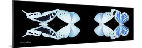 Miss Butterfly X-Ray Duo Black Pano XIII-Philippe Hugonnard-Mounted Photographic Print