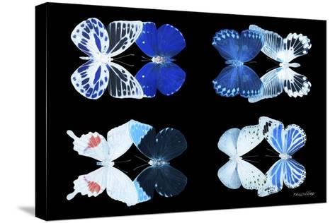 Miss Butterfly X-Ray Duo Black V-Philippe Hugonnard-Stretched Canvas Print