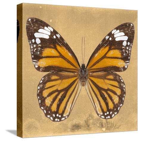 Miss Butterfly Genutia Sq - Honey-Philippe Hugonnard-Stretched Canvas Print