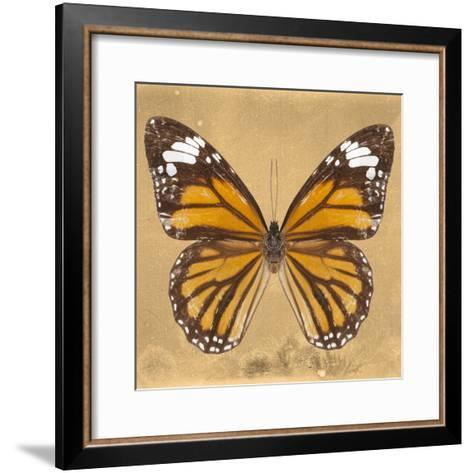 Miss Butterfly Genutia Sq - Honey-Philippe Hugonnard-Framed Art Print