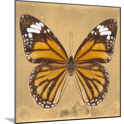 Miss Butterfly Genutia Sq - Honey-Philippe Hugonnard-Mounted Photographic Print