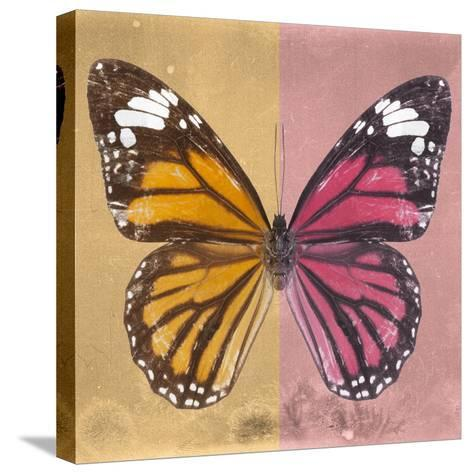 Miss Butterfly Genutia Sq - Honey & Hot Pink-Philippe Hugonnard-Stretched Canvas Print