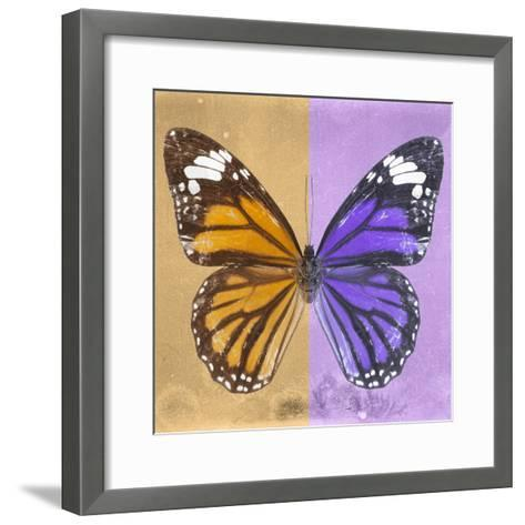 Miss Butterfly Genutia Sq - Honey & Purple-Philippe Hugonnard-Framed Art Print