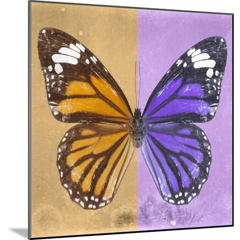 Miss Butterfly Genutia Sq - Honey & Purple-Philippe Hugonnard-Mounted Photographic Print