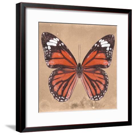 Miss Butterfly Genutia Sq - Orange-Philippe Hugonnard-Framed Art Print