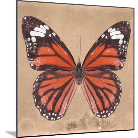 Miss Butterfly Genutia Sq - Orange-Philippe Hugonnard-Mounted Photographic Print