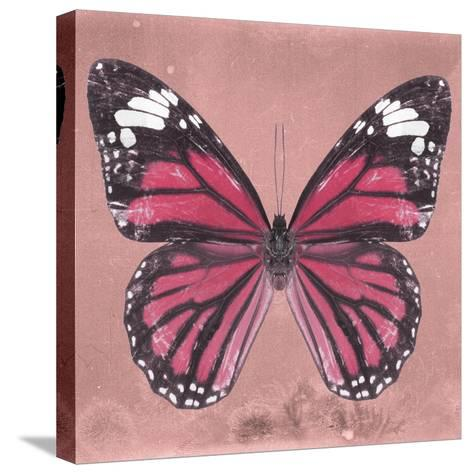 Miss Butterfly Genutia Sq - Hot Pink-Philippe Hugonnard-Stretched Canvas Print