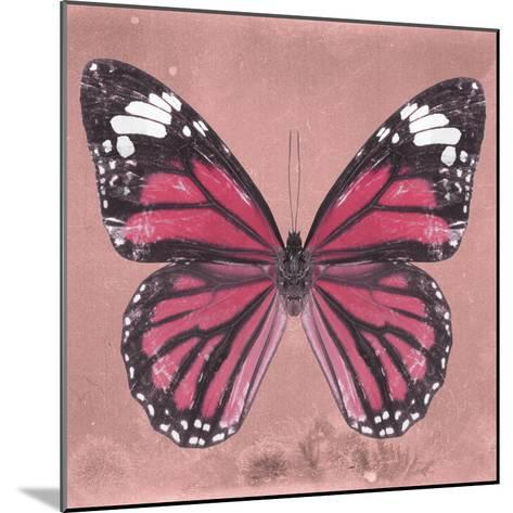 Miss Butterfly Genutia Sq - Hot Pink-Philippe Hugonnard-Mounted Photographic Print