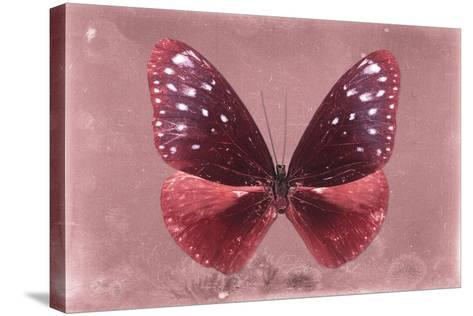 Miss Butterfly Euploea - Red-Philippe Hugonnard-Stretched Canvas Print