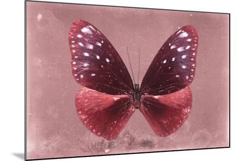 Miss Butterfly Euploea - Red-Philippe Hugonnard-Mounted Photographic Print