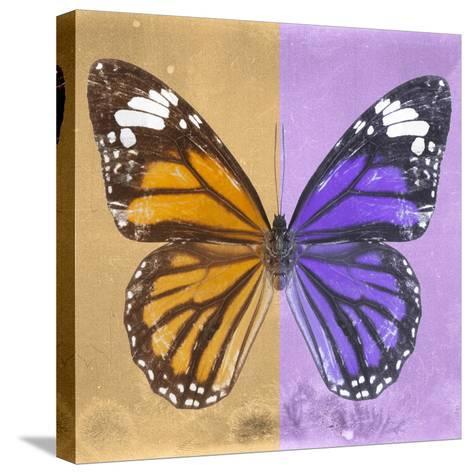Miss Butterfly Genutia Sq - Honey & Purple-Philippe Hugonnard-Stretched Canvas Print