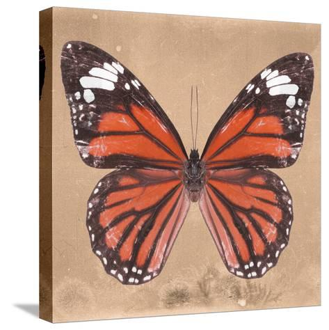 Miss Butterfly Genutia Sq - Orange-Philippe Hugonnard-Stretched Canvas Print