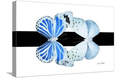 Miss Butterfly Duo Salateuploea - X-Ray B&W Edition-Philippe Hugonnard-Stretched Canvas Print