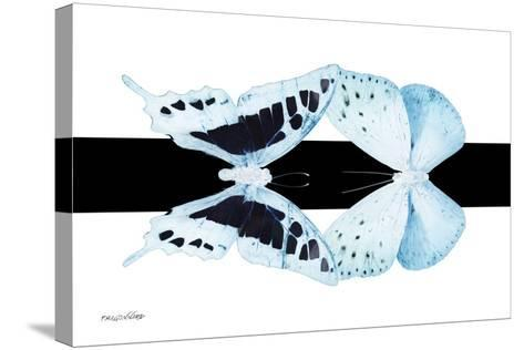 Miss Butterfly Duo Cloanthaea - X-Ray B&W Edition II-Philippe Hugonnard-Stretched Canvas Print