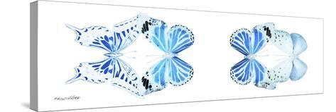 Miss Butterfly X-Ray Duo White Pano VI-Philippe Hugonnard-Stretched Canvas Print