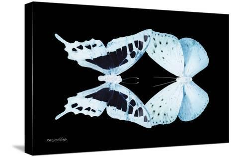 Miss Butterfly Duo Cloanthaea - X-Ray Black Edition-Philippe Hugonnard-Stretched Canvas Print