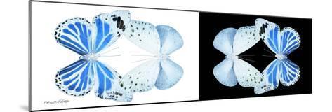 Miss Butterfly Duo Salateuploea Pan - X-Ray B&W Edition-Philippe Hugonnard-Mounted Photographic Print