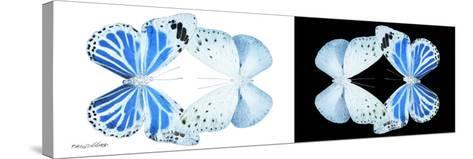 Miss Butterfly Duo Salateuploea Pan - X-Ray B&W Edition-Philippe Hugonnard-Stretched Canvas Print