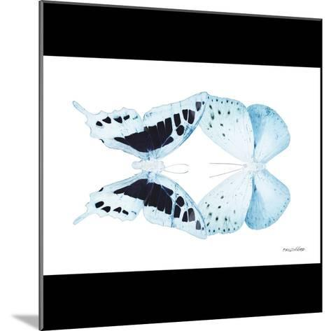 Miss Butterfly Duo Cloanthaea Sq - X-Ray B&W Edition-Philippe Hugonnard-Mounted Photographic Print