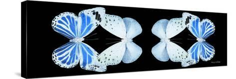 Miss Butterfly Duo Salateuploea Pan - X-Ray Black Edition II-Philippe Hugonnard-Stretched Canvas Print