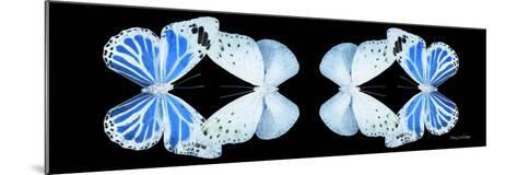 Miss Butterfly Duo Salateuploea Pan - X-Ray Black Edition II-Philippe Hugonnard-Mounted Photographic Print