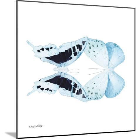Miss Butterfly Duo Cloanthaea Sq - X-Ray White Edition-Philippe Hugonnard-Mounted Photographic Print