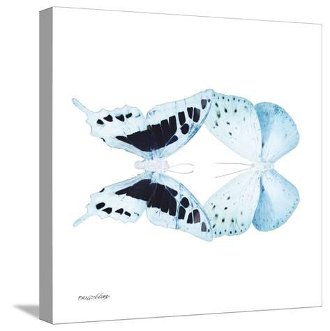 Miss Butterfly Duo Cloanthaea Sq - X-Ray White Edition-Philippe Hugonnard-Stretched Canvas Print