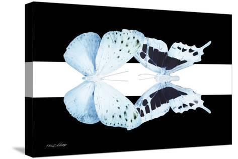 Miss Butterfly Duo Euploanthus - X-Ray B&W Edition II-Philippe Hugonnard-Stretched Canvas Print