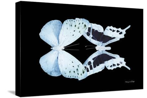Miss Butterfly Duo Euploanthus - X-Ray Black Edition-Philippe Hugonnard-Stretched Canvas Print