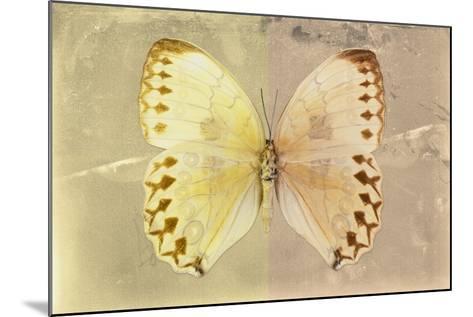 Miss Butterfly Formosana - Yellow & Dark Beige-Philippe Hugonnard-Mounted Photographic Print