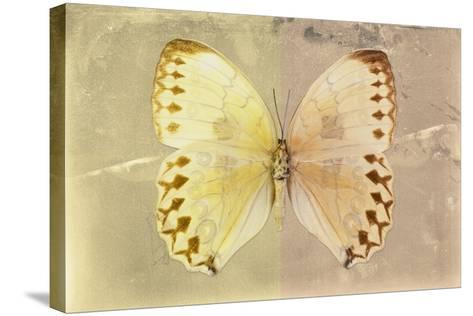 Miss Butterfly Formosana - Yellow & Dark Beige-Philippe Hugonnard-Stretched Canvas Print