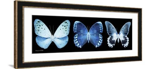 Miss Butterfly X-Ray Panoramic Black-Philippe Hugonnard-Framed Art Print