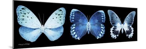 Miss Butterfly X-Ray Panoramic Black-Philippe Hugonnard-Mounted Photographic Print