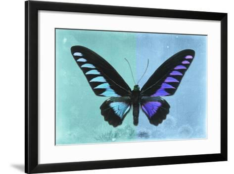 Miss Butterfly Brookiana Profil - Turquoise & Skyblue-Philippe Hugonnard-Framed Art Print