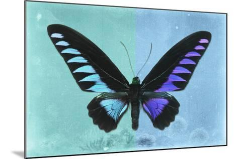 Miss Butterfly Brookiana Profil - Turquoise & Skyblue-Philippe Hugonnard-Mounted Photographic Print