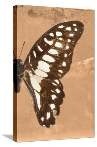 Miss Butterfly Graphium Profil - Orange-Philippe Hugonnard-Stretched Canvas Print