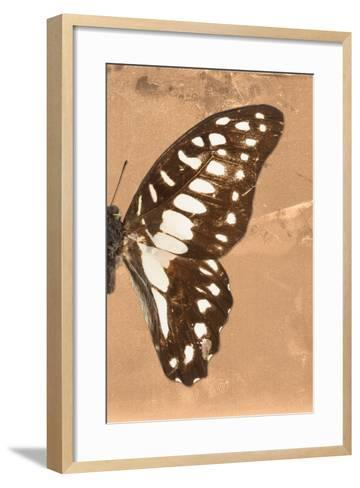 Miss Butterfly Graphium Profil - Orange-Philippe Hugonnard-Framed Art Print
