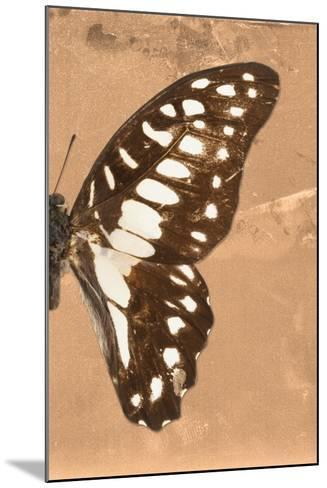 Miss Butterfly Graphium Profil - Orange-Philippe Hugonnard-Mounted Photographic Print